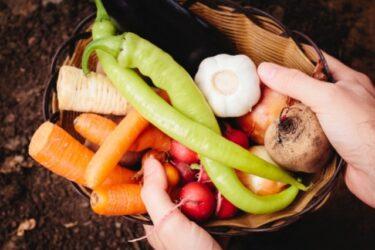 京野菜の歴史とお店